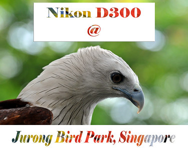 Nikon D300 camera at the Jurgon Bird Park, Singapore