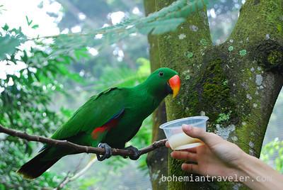 at Jurong Bird Park.
