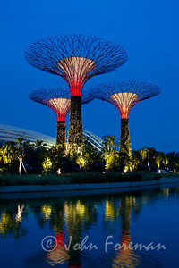 Supertrees of Gardens by the Bay, Singapore