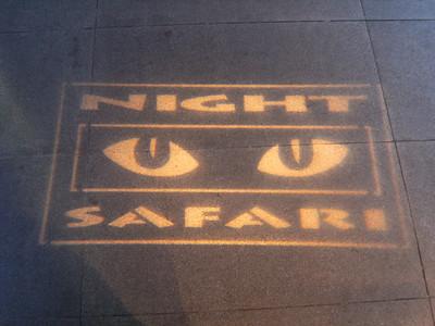 Night Safari (day 9)