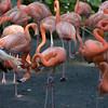 Jurong Bird Park-3.jpg