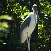 Jurong Bird Park-11.jpg