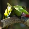 Jurong Bird Park-2.jpg