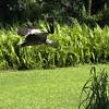 Jurong Bird Park-7.jpg