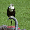 Jurong Bird Park-10.jpg