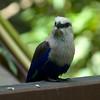 Jurong Bird Park-13.jpg