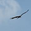 Jurong Bird Park-8.jpg