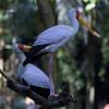 Jurong Bird Park-12.jpg