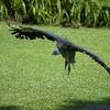 Jurong Bird Park-6.jpg