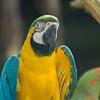 Jurong Bird Park-1.jpg