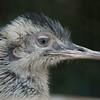 Jurong Bird Park-14.jpg