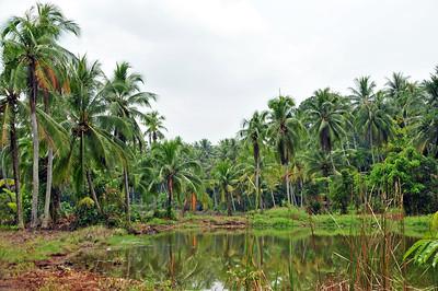 Palau Ubin island