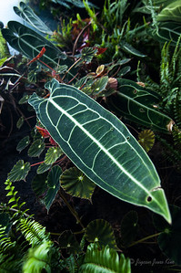 Plants at the Cloud Forest