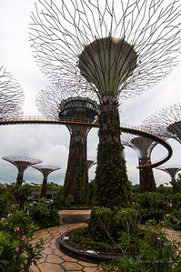 Supertrees and the skybridge