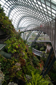 The Cloud Forest - walking bridge