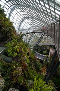 The Cloud Forest - walking bridge