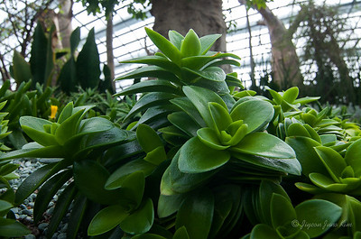 Exotic plants in the Flower Dome