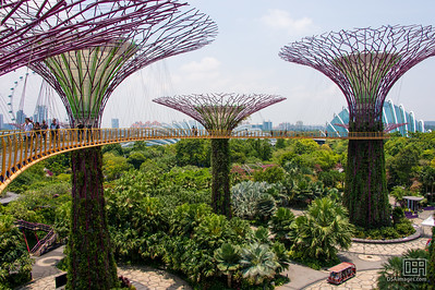 Supertree Grove - OCBC Skyway