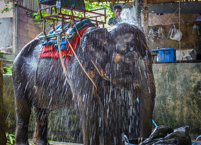 Bath time in Thailand!