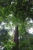 rain_forest_1