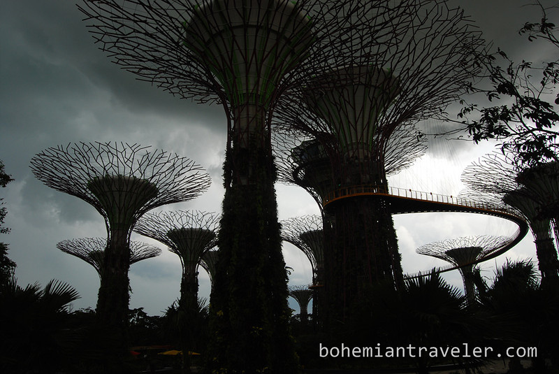 The Supertrees at Gardens by the Bay.