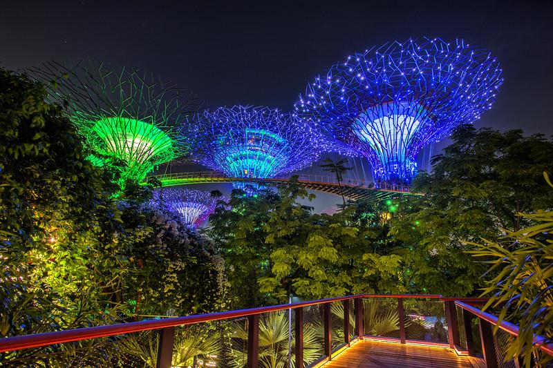 Supertree Blue