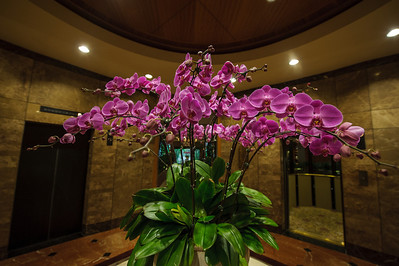 Stunning orchids at the Regent Singapore.