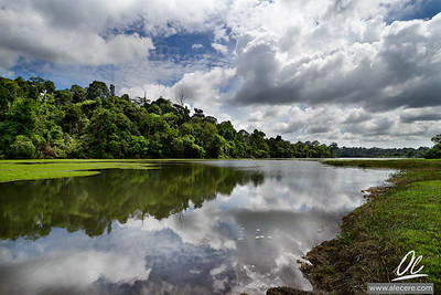 MacRitchie on a cloudy day