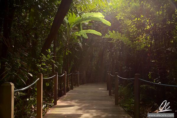 The path through the garden - Sun beams in the vegetation of the Botanic Garden