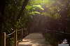 The path through the garden - Sun beams in the vegetation of the Botanic Garden