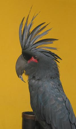 chinatown bird.jpg