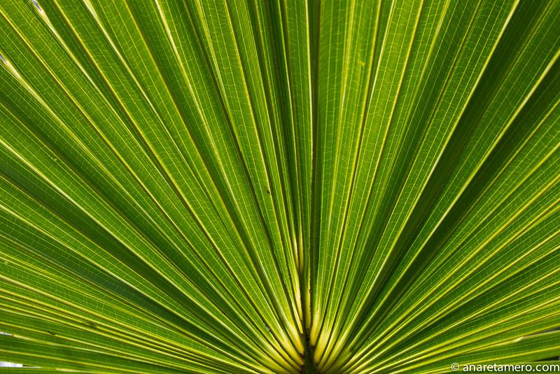detalle palmera-9844