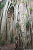 Troncos y ramas creciendo sobre la estructura de la ruína