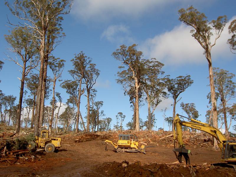 Devastated forests outside Bombala