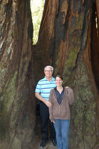 Joe and Diane at the base of redwood trees