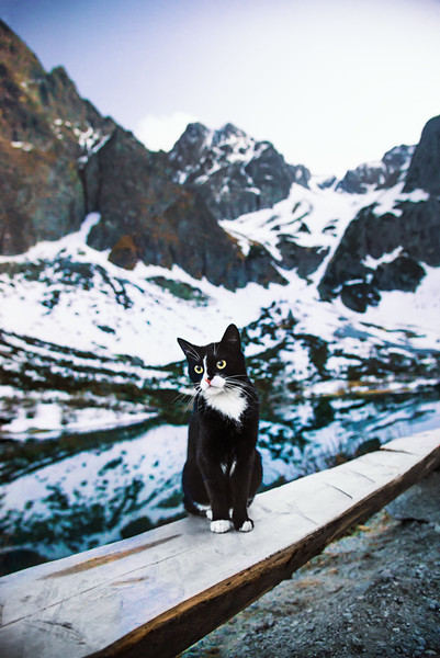 The king of the High Tatras. This is Felix, the cat of the chalet seen previously in the gallery. He even reached us as we were taking some night shots on the other side of the lake, meowing around.