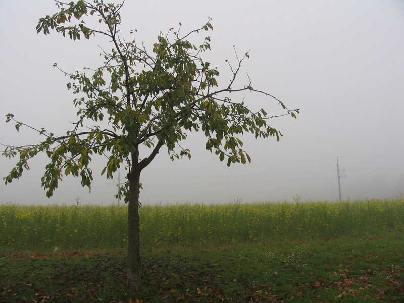 Lots of Autumn fog over the fields in Slovakia.  This was typical.
