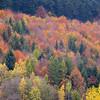 Same hillside, more colors.