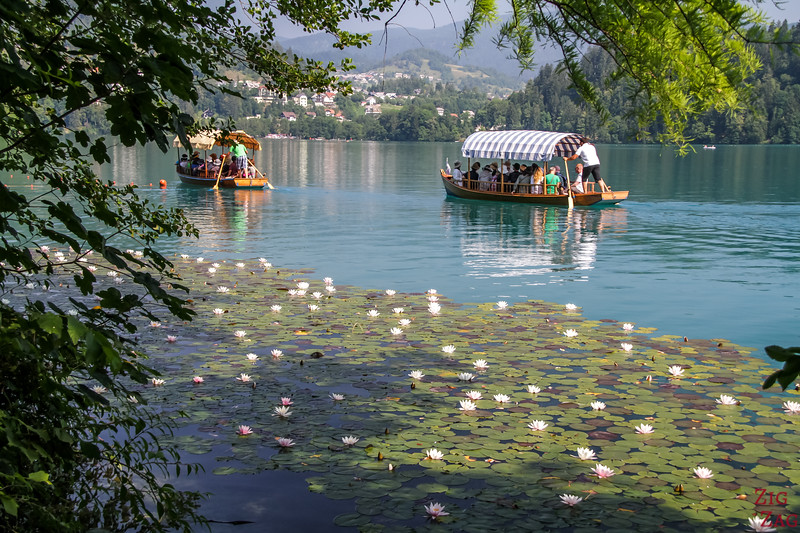 Chose a faire au lac de Bled Slovenie - Bateau traditionnel Pletna