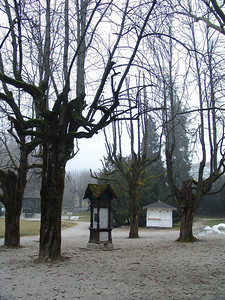 haunted trees in Bled