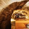 Postonjna Cave Train