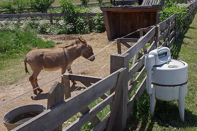 donkey_washer_06-13