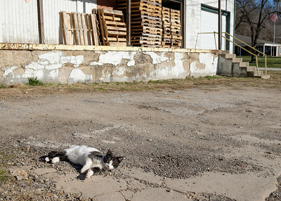 small_town_cat-t1046