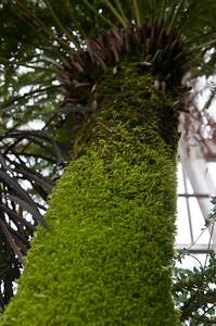 Tazmanian Tree Fern.