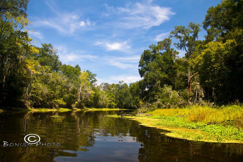 Beautiful Scenery along the Santa Fe River - Photo by Pat Bonish