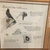 Gatlin-birds