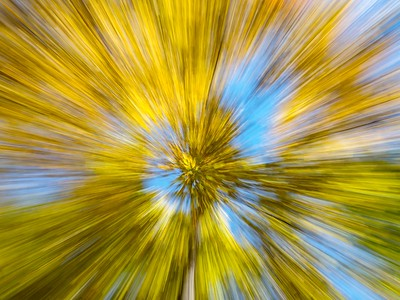 Tree zoom: Julie NAILED IT!!!