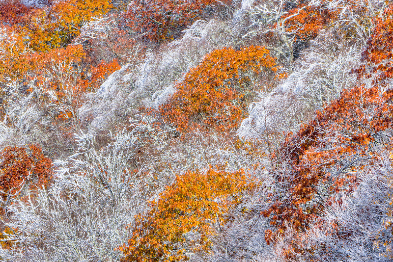 Autumn colors and snow,,,