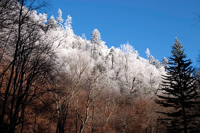 Snow, Tennessee side of Newfound Gap, November 27