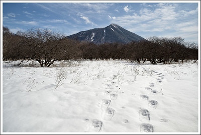 For much of the time we followed a set of tracks ( the ones on the left).  The tracks on the right are Seishi's.